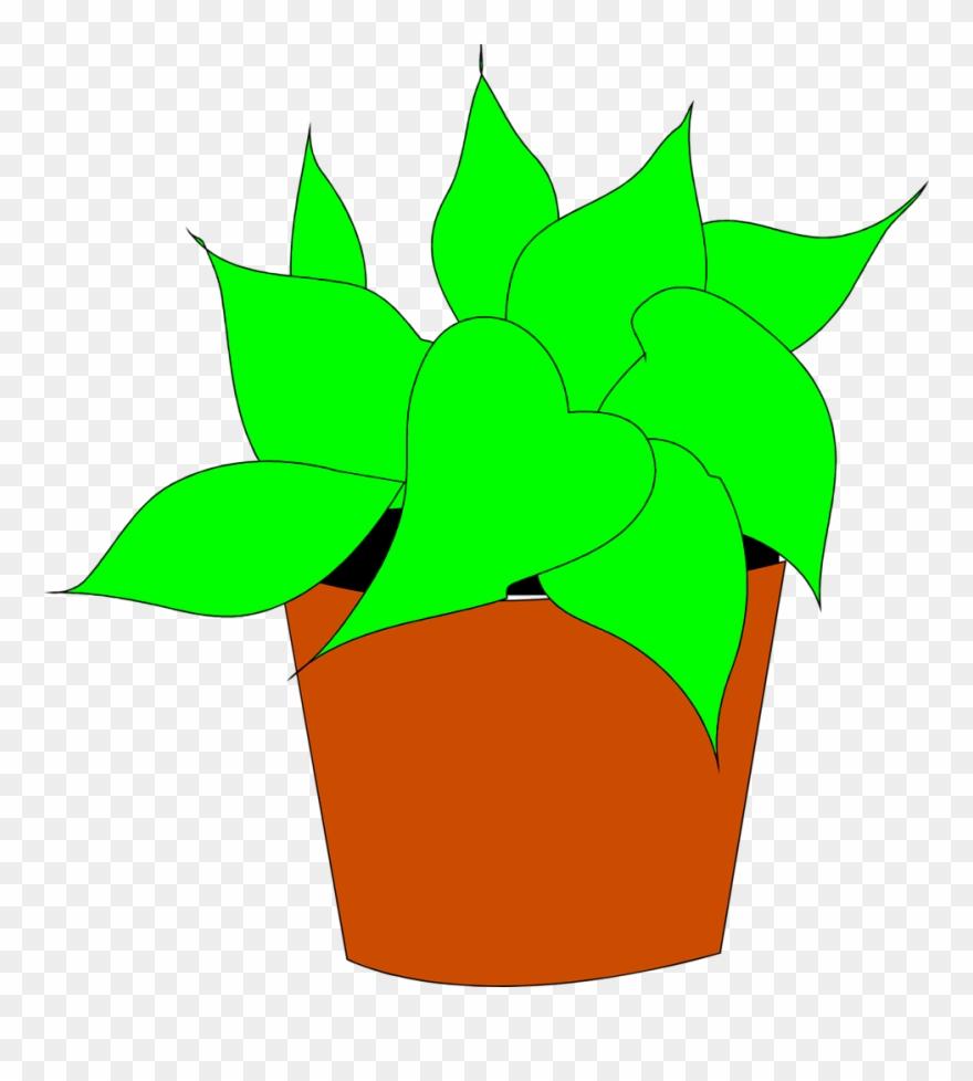 flowering-plant # 5076909