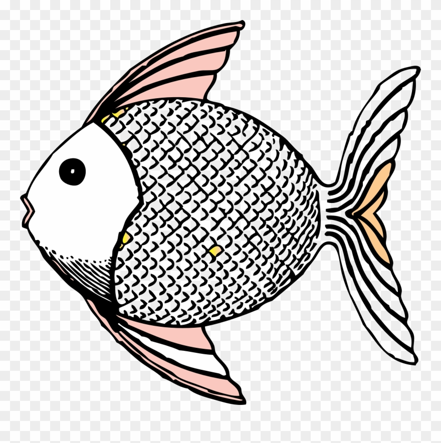fish # 4855332