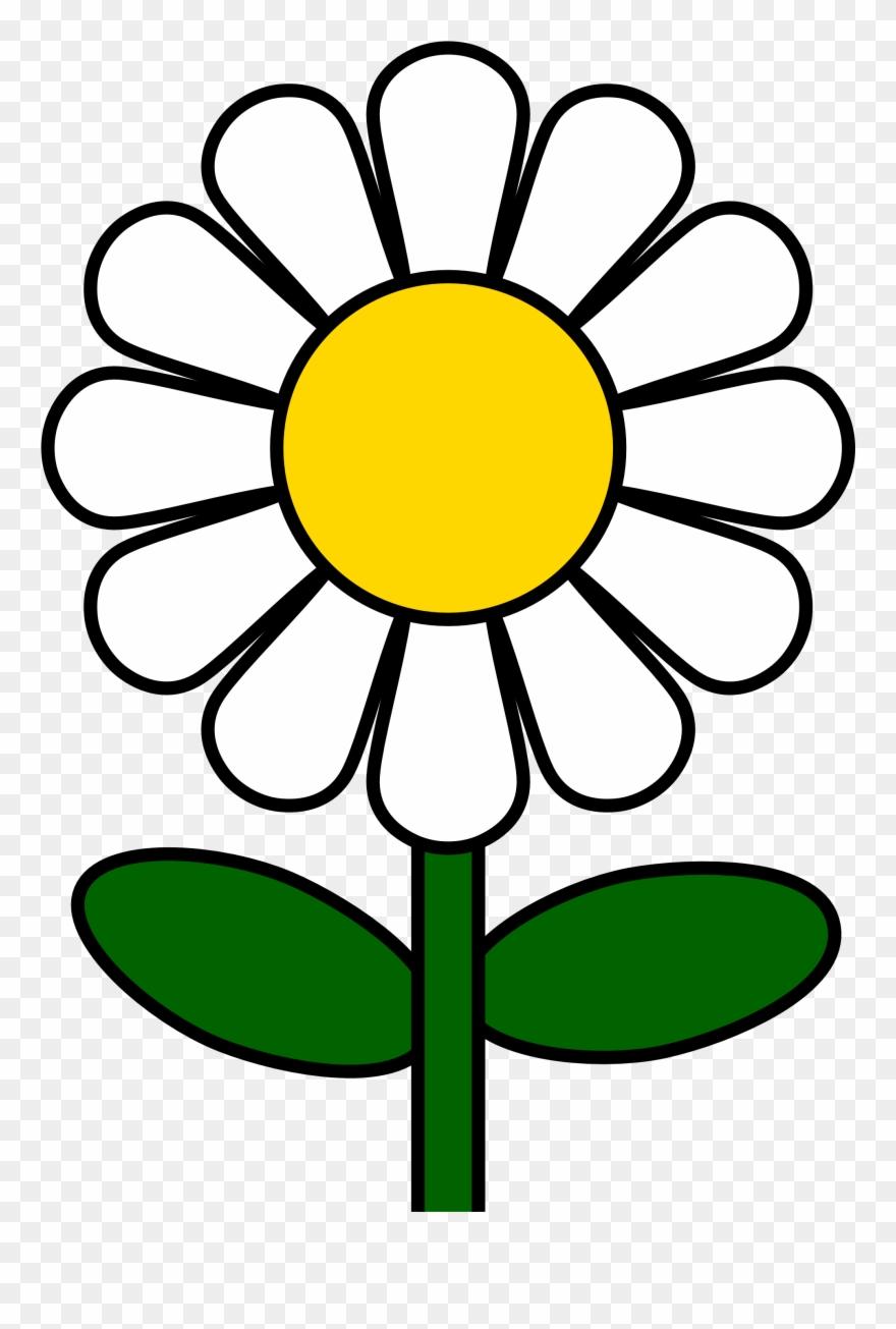 daisy # 4856660