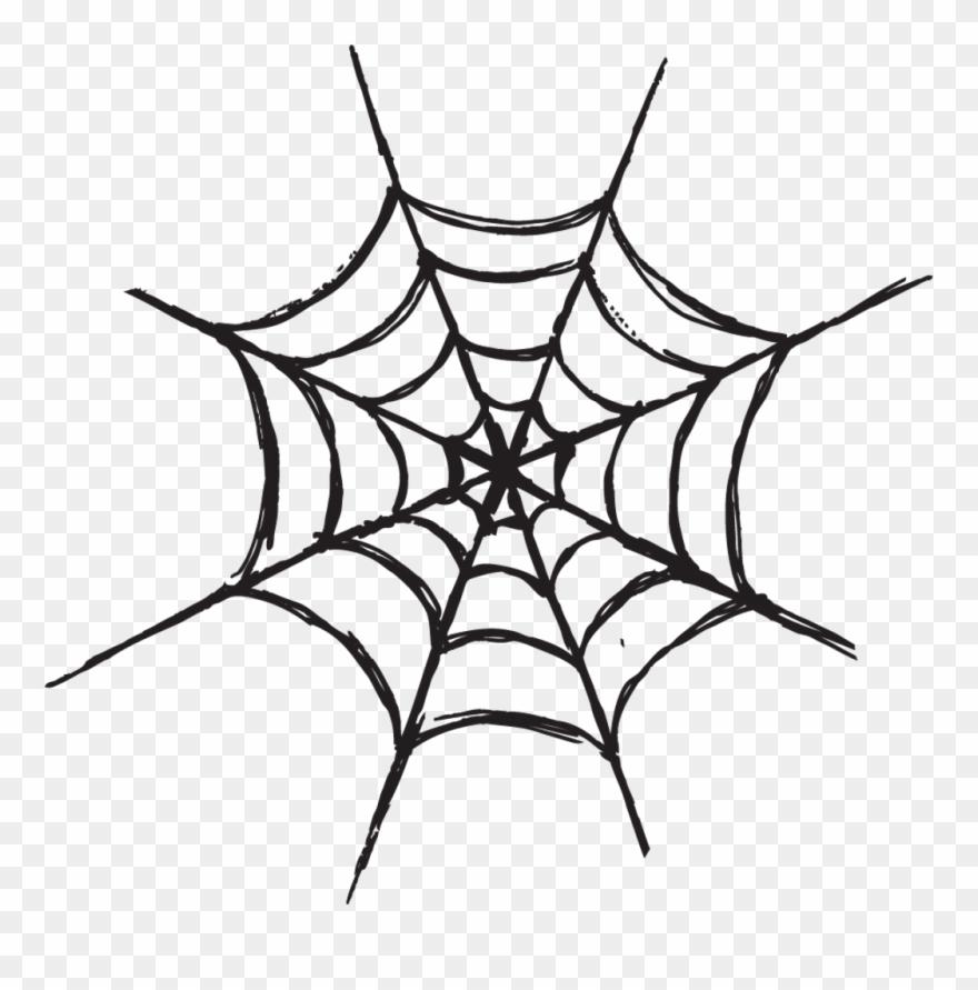 spider # 5242921