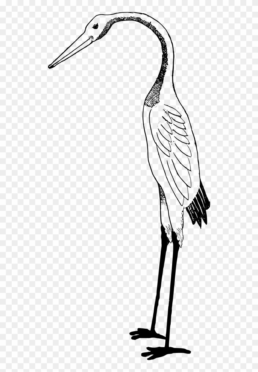 stork # 4875576