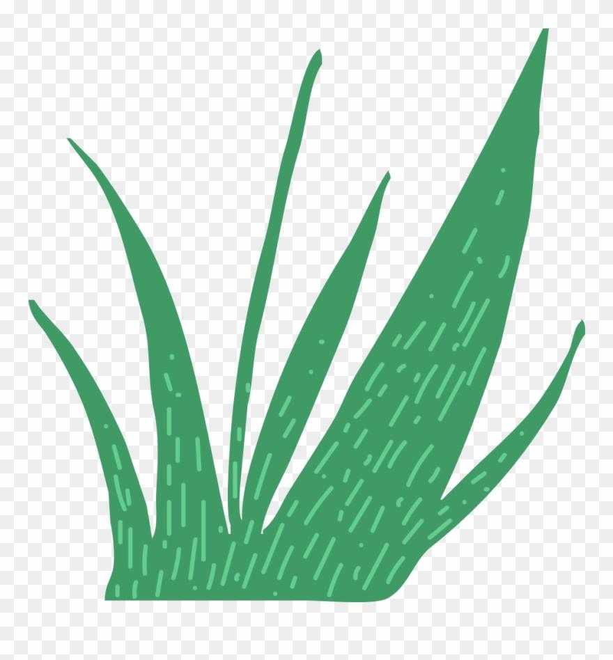 grass # 4843132
