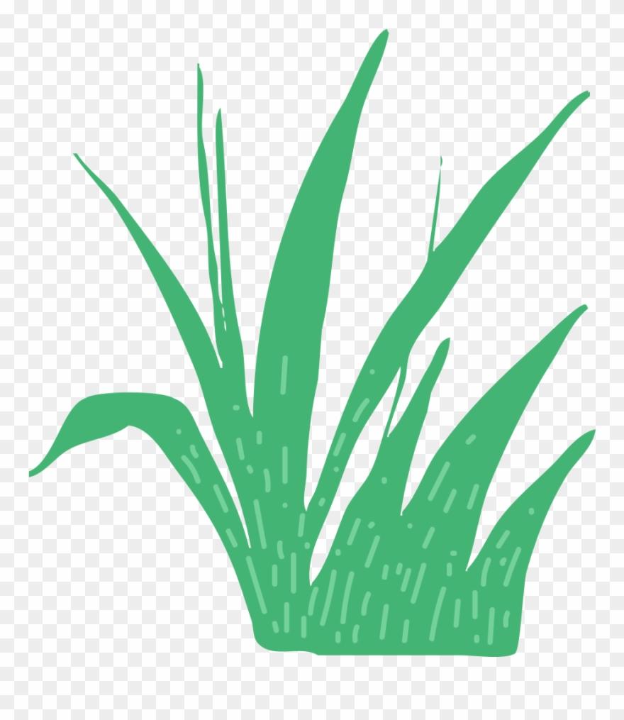 grass # 4843131