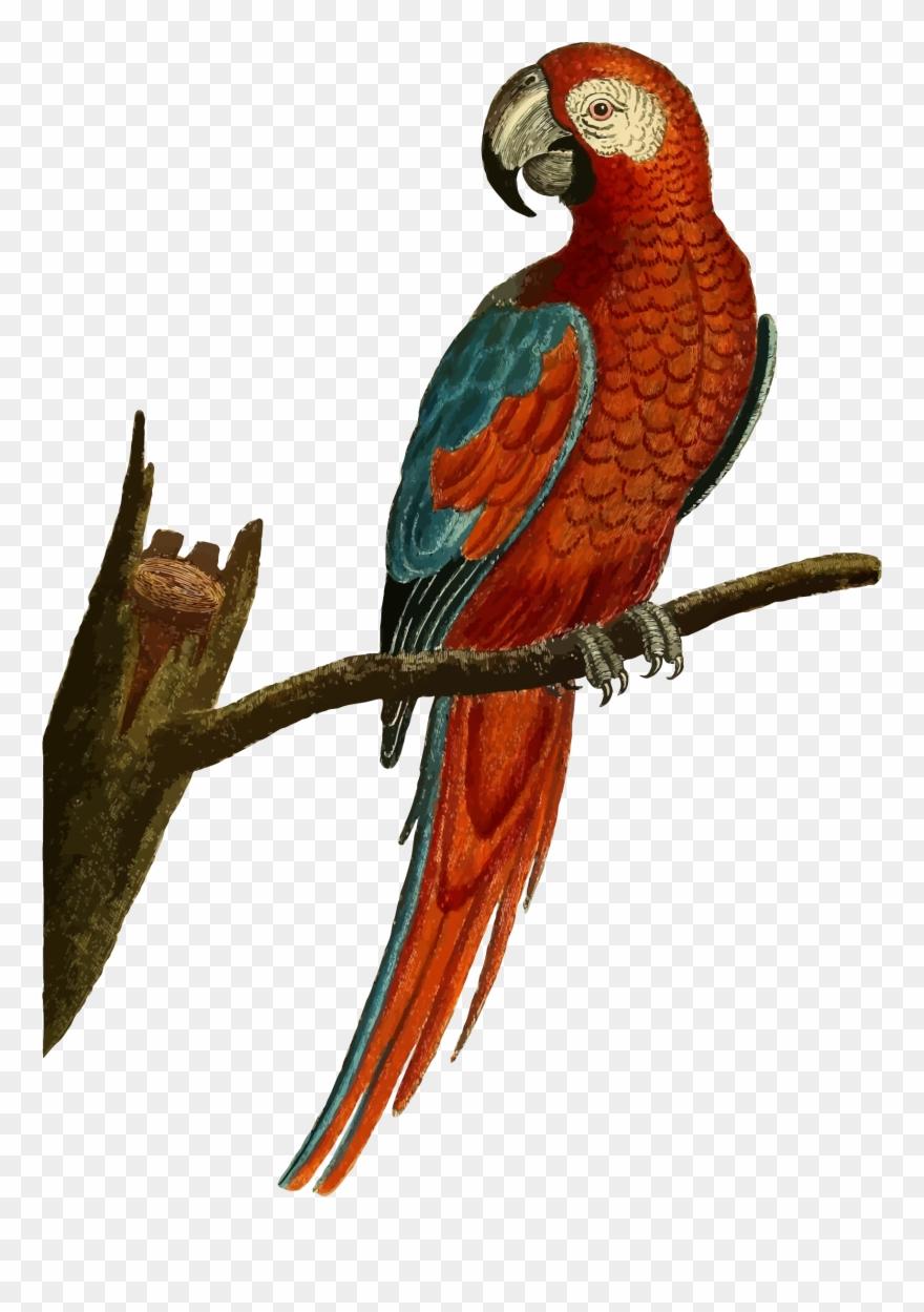parrot # 4843656