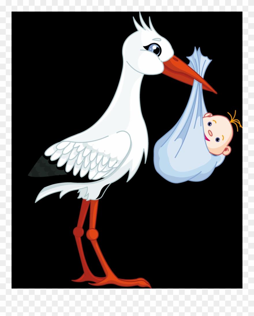 stork # 4843922