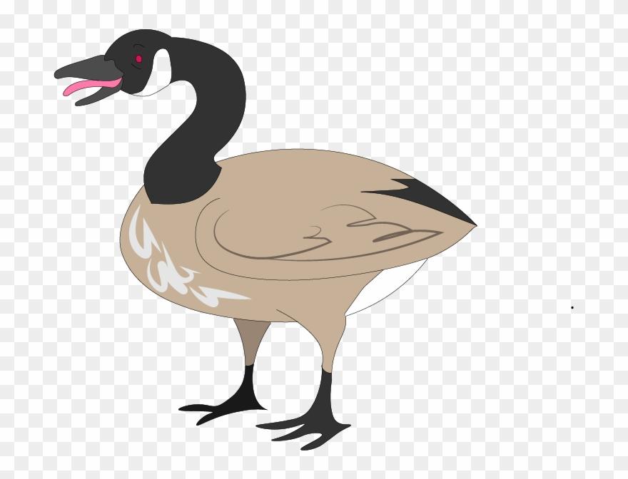 goose # 4865877