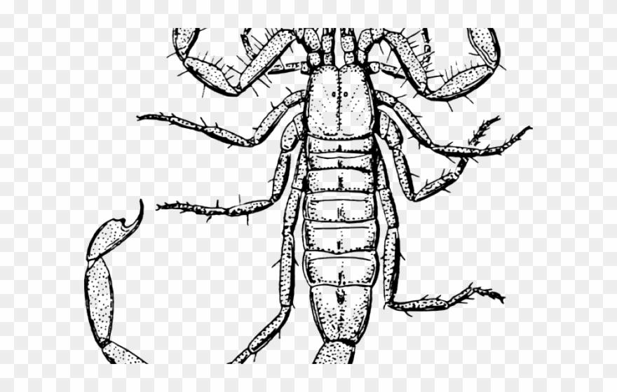 scorpion # 4835492