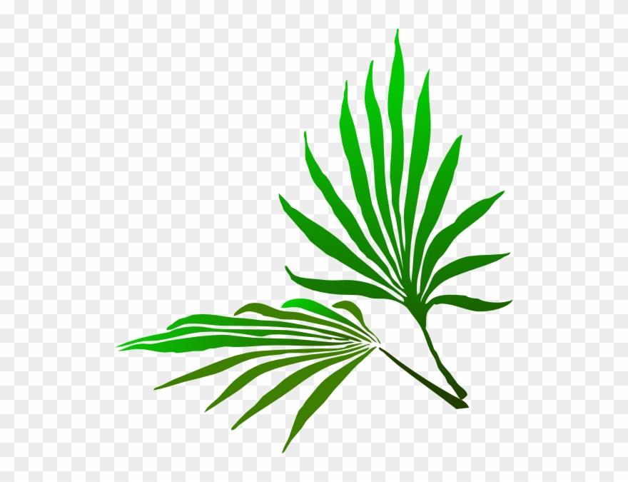palm-tree # 4835499