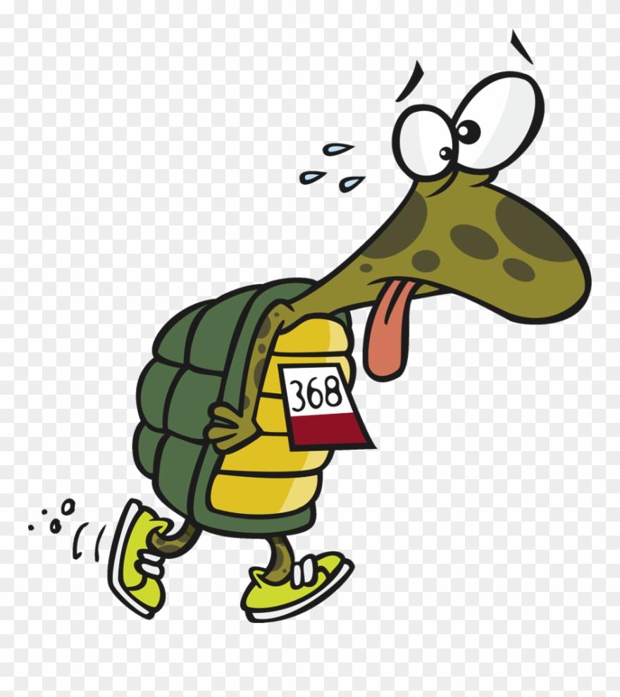 turtle # 4836148