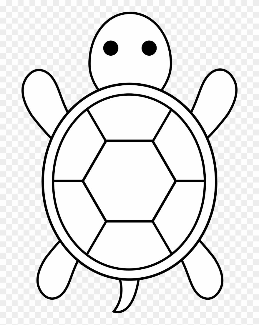 turtle # 4833607