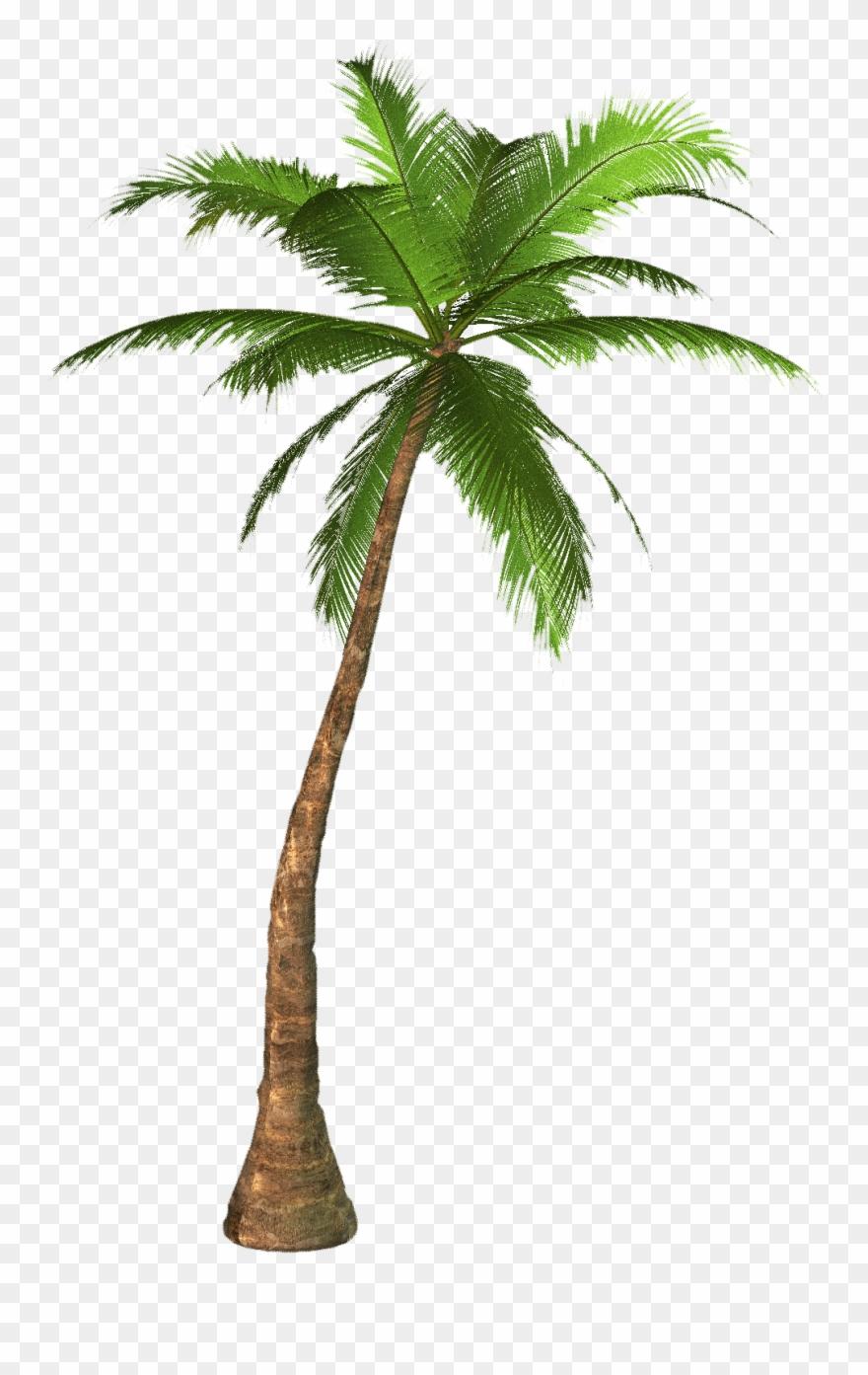 palm-tree # 4859097