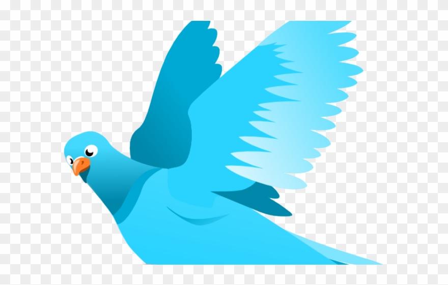 bird-nest # 4840044