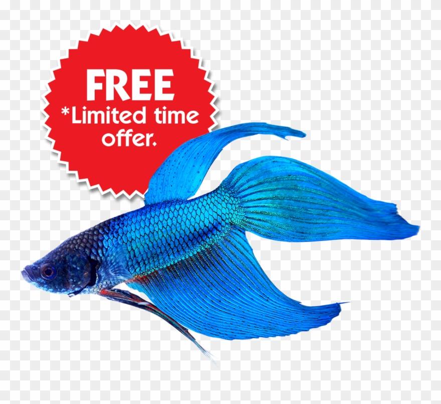fish # 4837312
