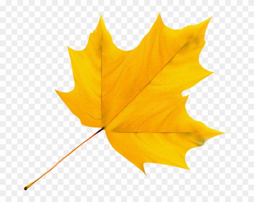 leaf # 4838536