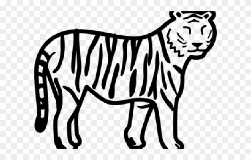 tiger # 4840706