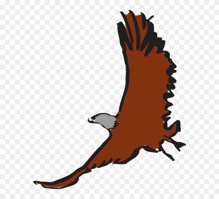 hawk # 4984852