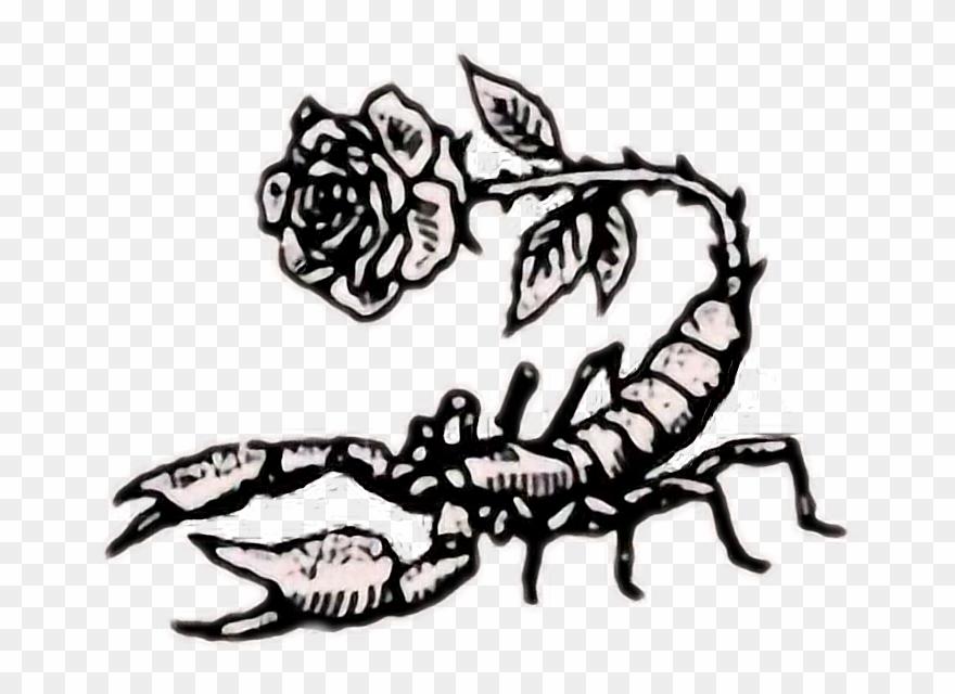 scorpion # 4981682