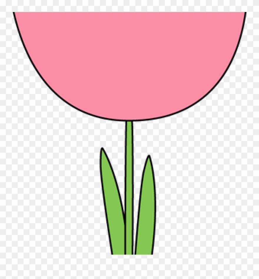 tulip # 4960367