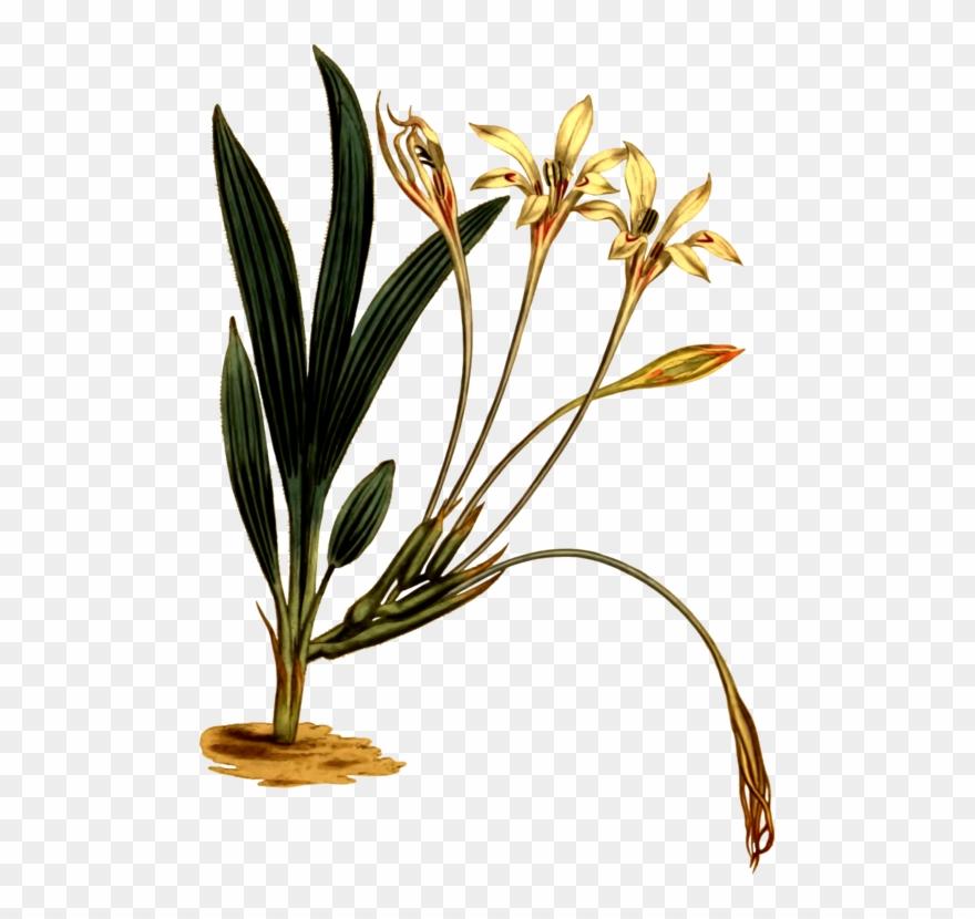 plant-stem # 4962426