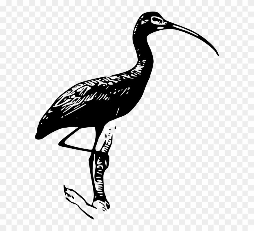 stork # 4955614