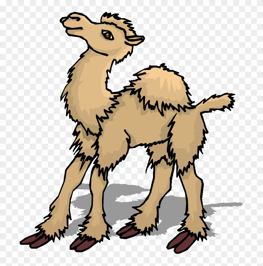camel # 4957770
