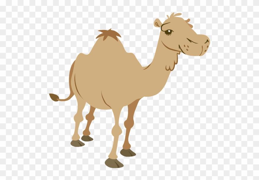 camel # 4958021