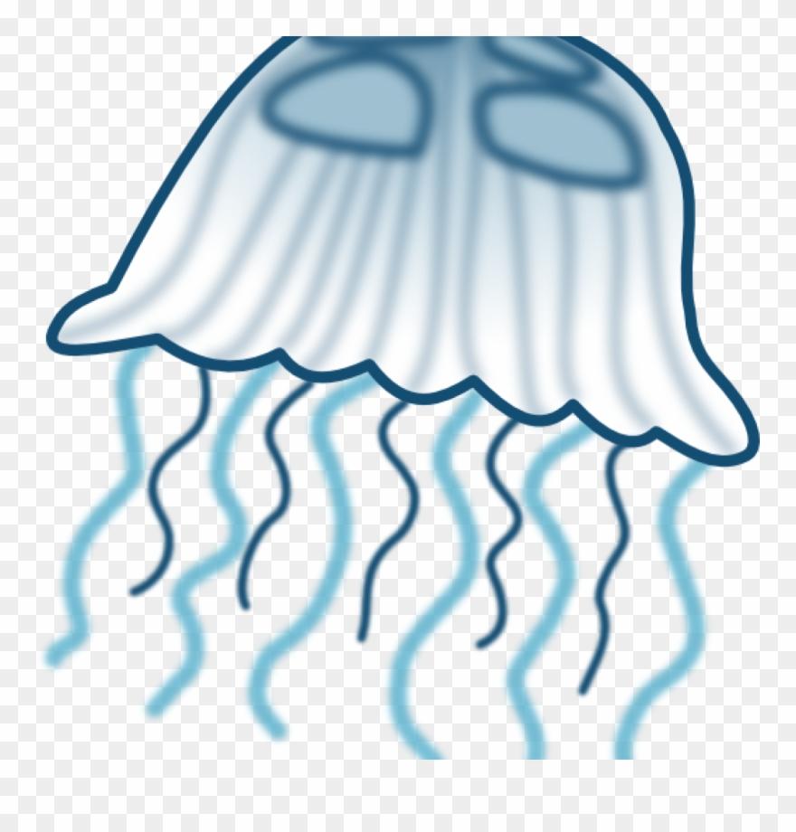 jellyfish # 4957305