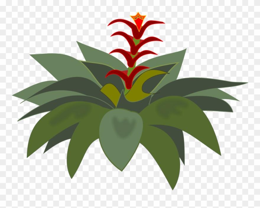 flowering-plant # 4986134
