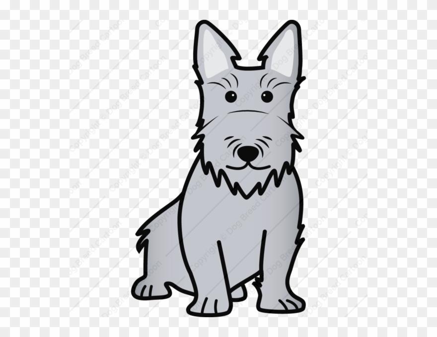 yorkshire-terrier # 4988801