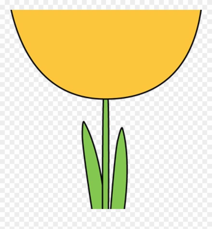 tulip # 4987881