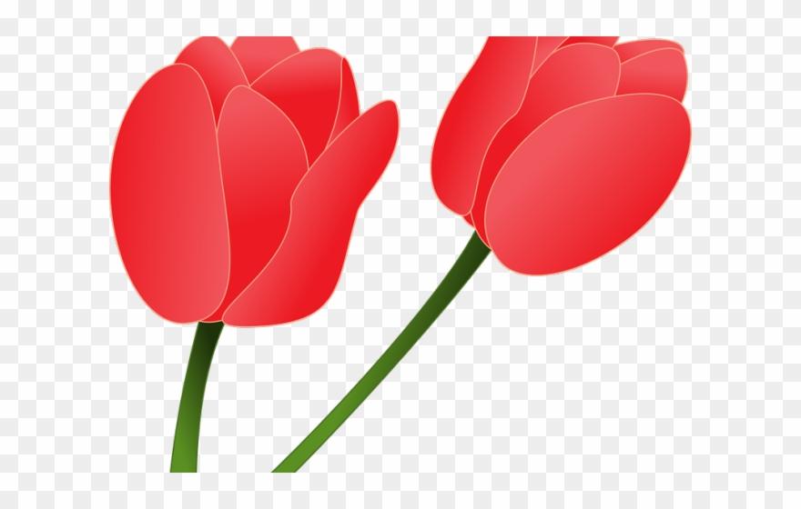tulip # 4987729