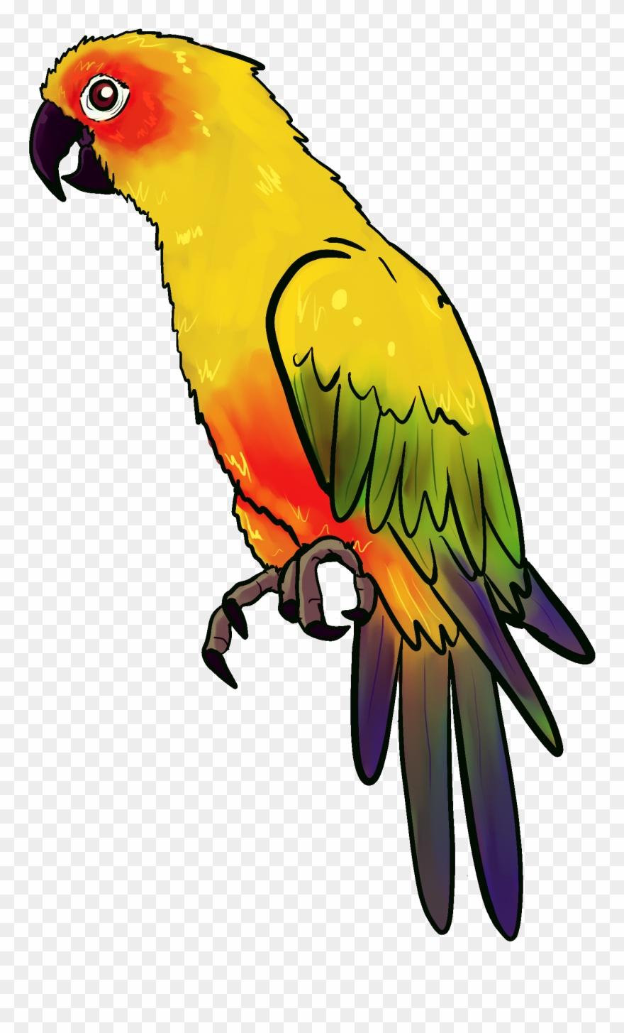 parrot # 4953076