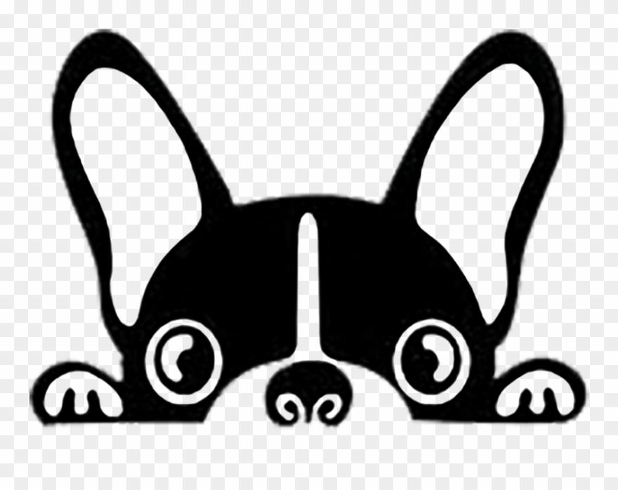 yorkshire-terrier # 4953482