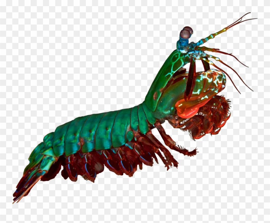 shrimp # 4954648