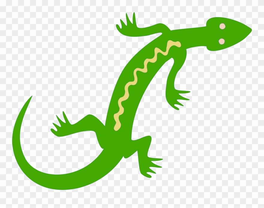 salamander # 4916006
