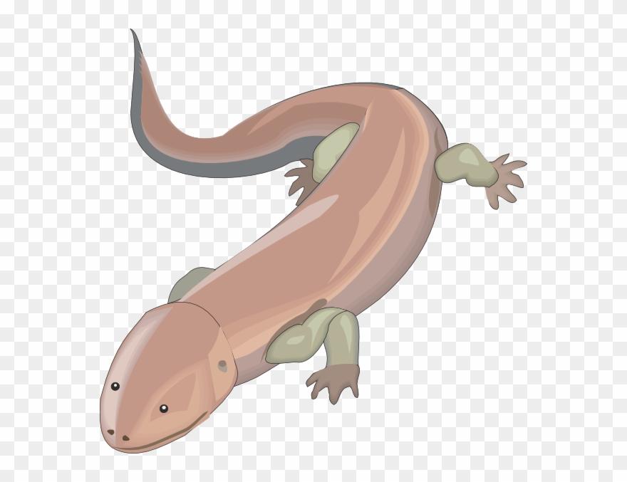 salamander # 4910157