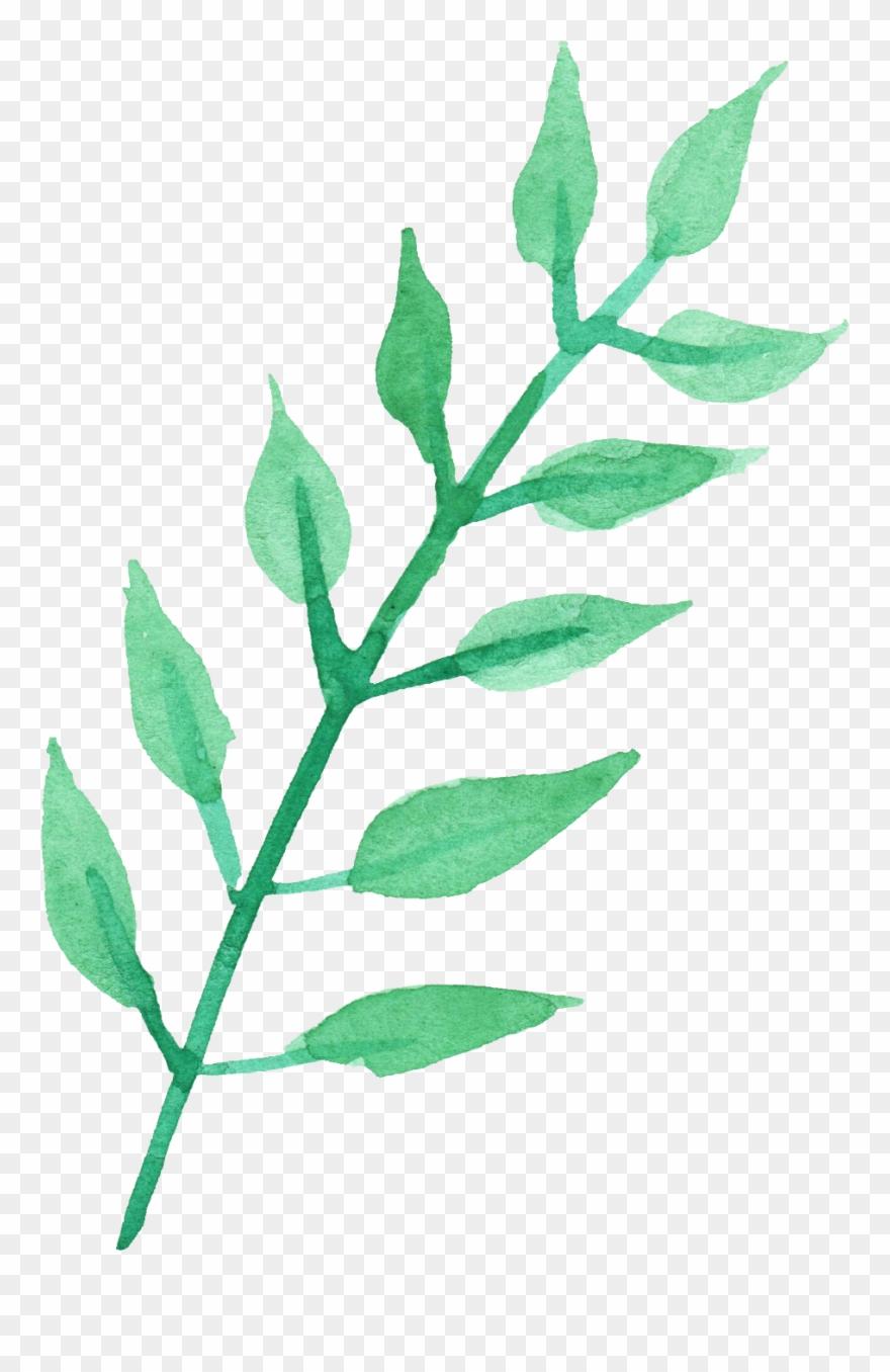 plant-stem # 4976635