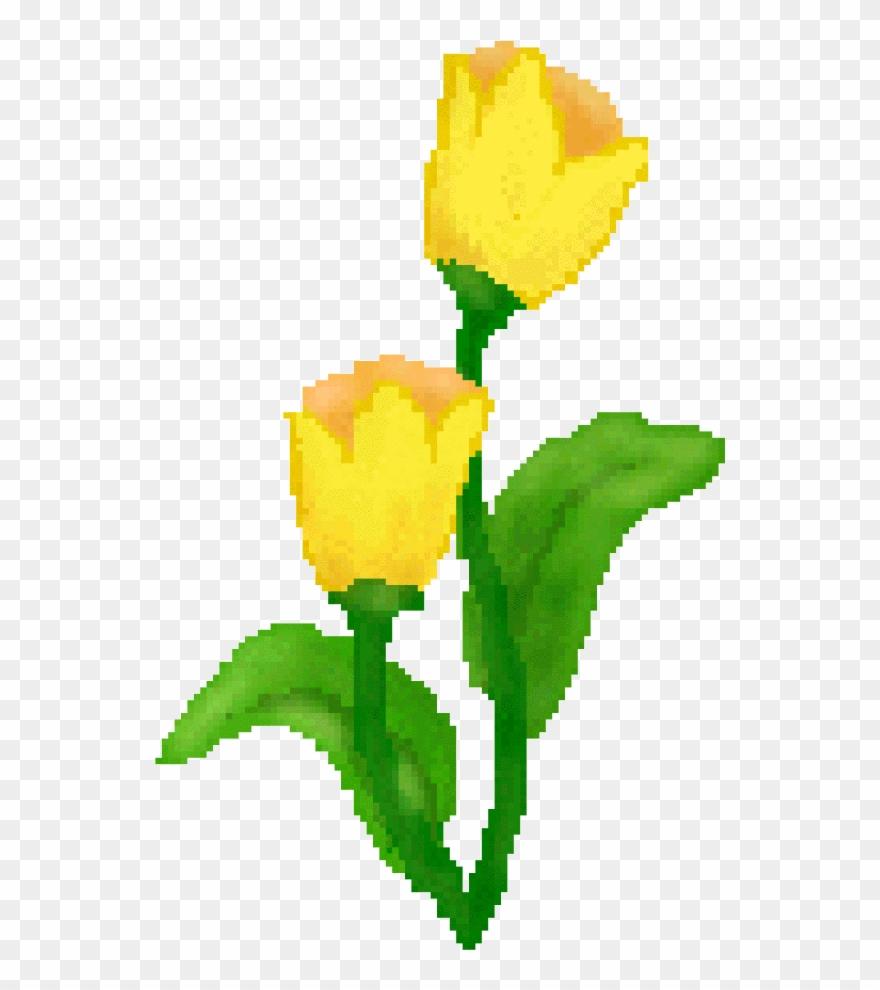 tulip # 4999685