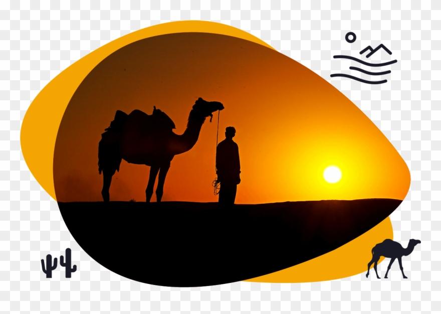 camel # 4991604