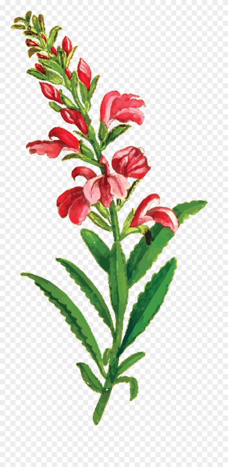 flowering-plant # 4991356