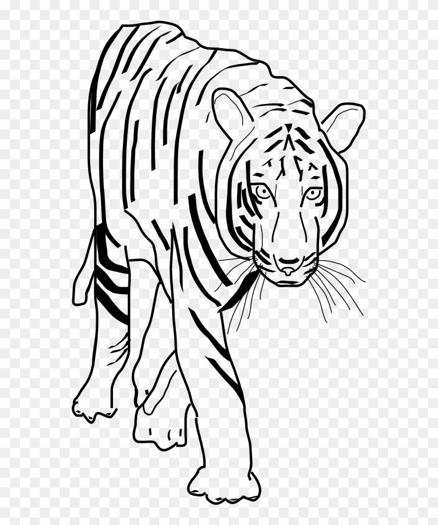 bengal-tiger # 4918275