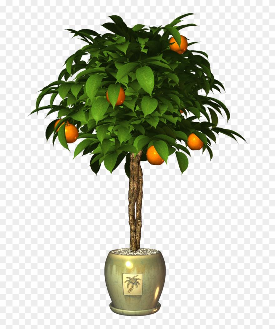 tangerine # 4990489