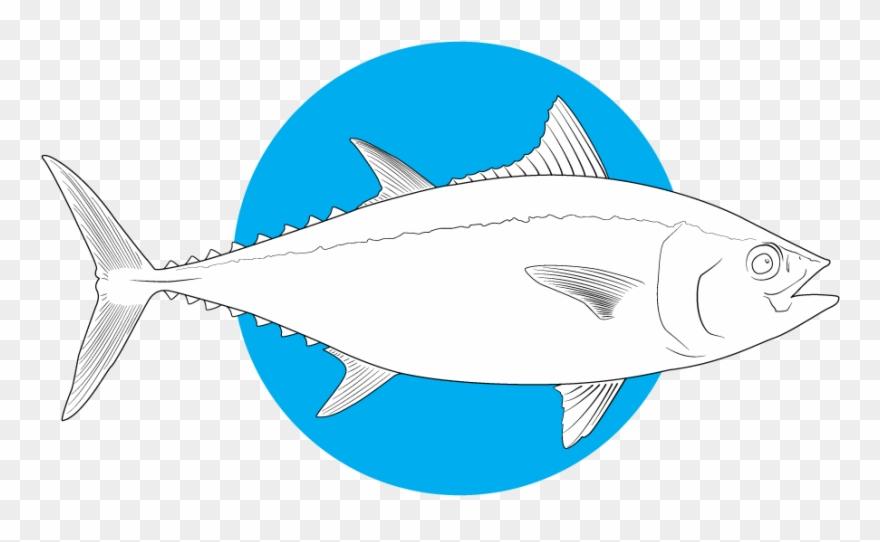 tuna # 5342811