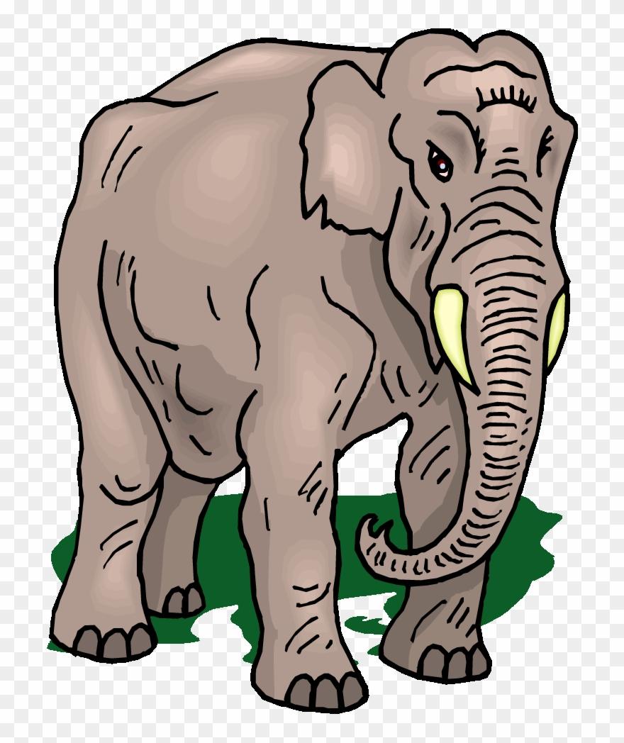 indian-elephant # 5343840
