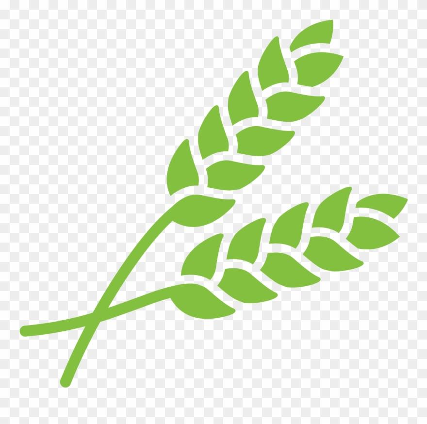 grain # 5350263