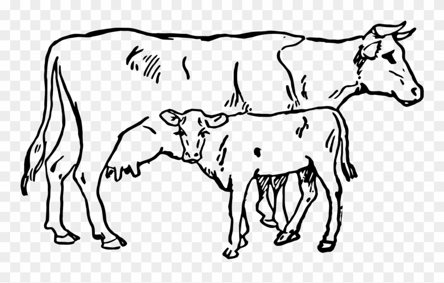 dairy-cow # 4888765