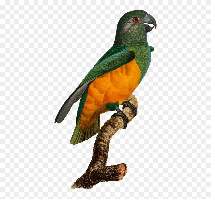 parrot # 4930910