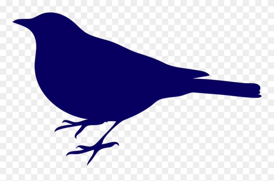 songbird # 4912098