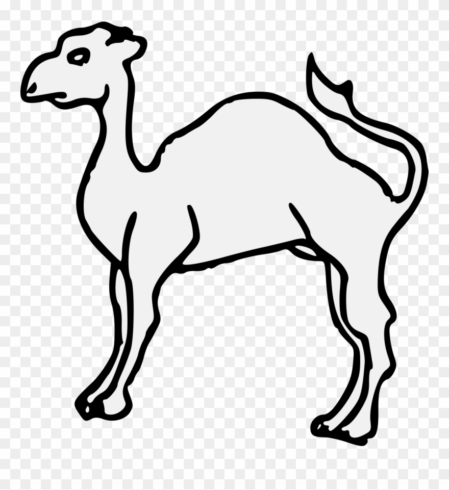camel # 4912253