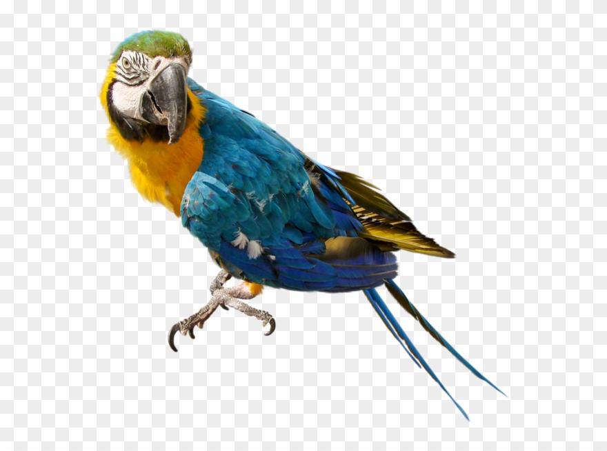 parrot # 4907390